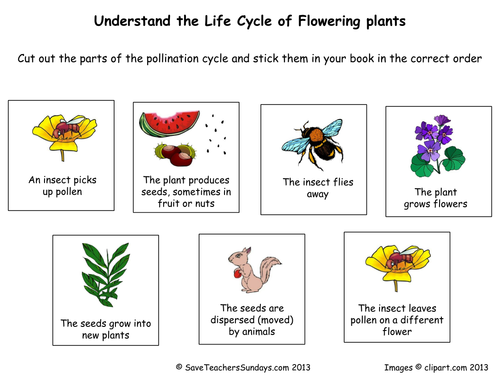 Life cycle of flowering plants (worksheet).pdf | growth cycle ...