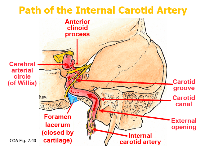 Clinical Manifestations Of Internal Carotid Artery Territory