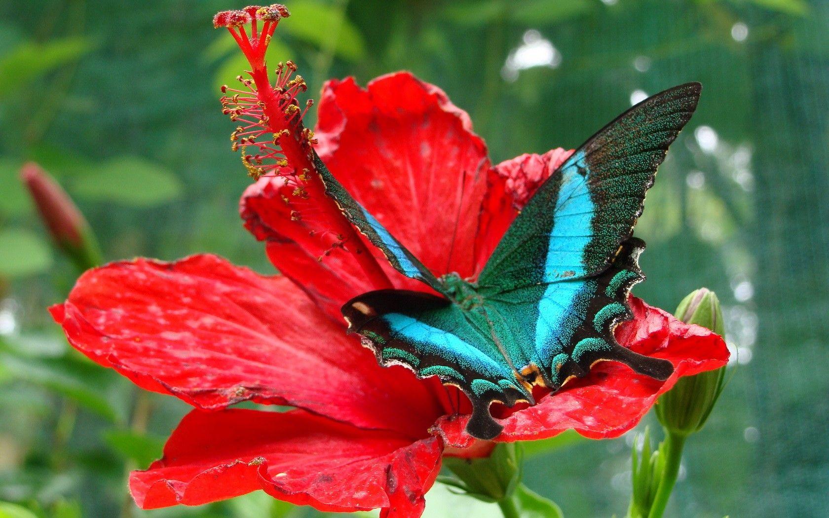 Pin Van Zzak C Op Farfalle Vlinders Mot