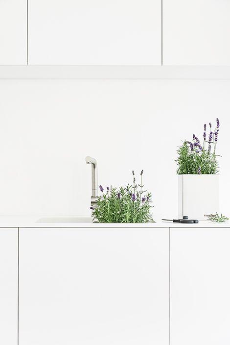 Lavendel für die Küche, mein #Kraeuterbeet #pflanztoepfe #vivanno - dekoration f r die k che