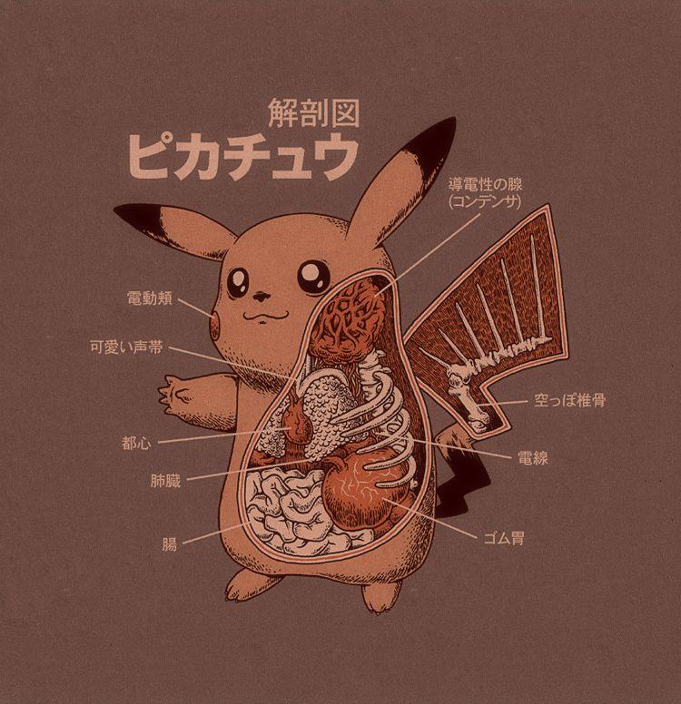 Pikachu Meat   Pop Culture   Pinterest   Anatomy, Pokémon and deviantART