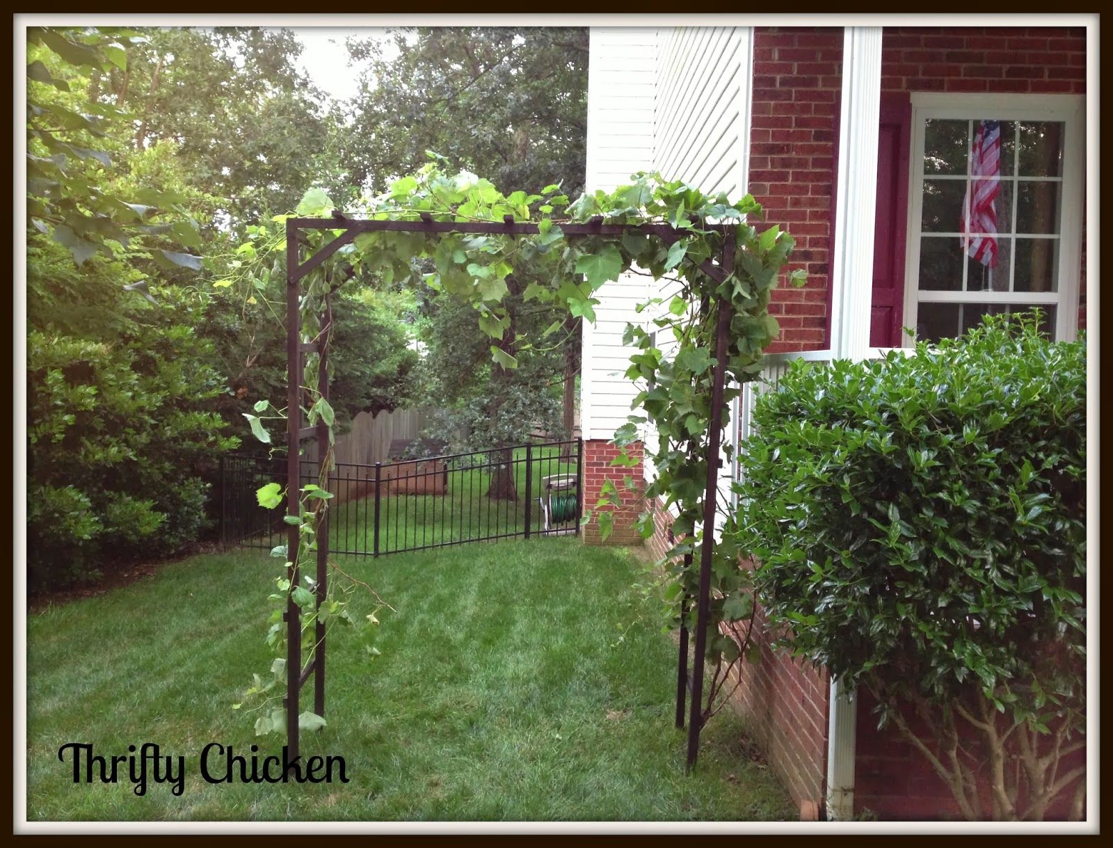 7 best grapevine trellis images on pinterest trellis design