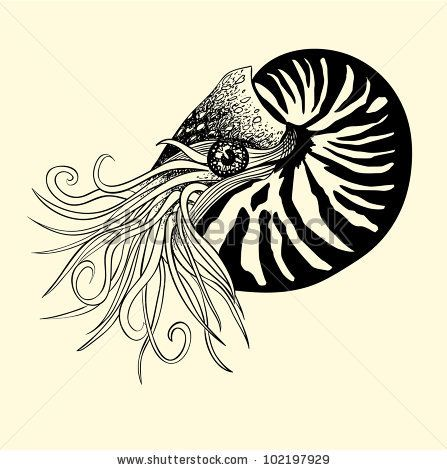 Nautilus Tattoo The Ancient Nautilus Shell Is A Symbol Of