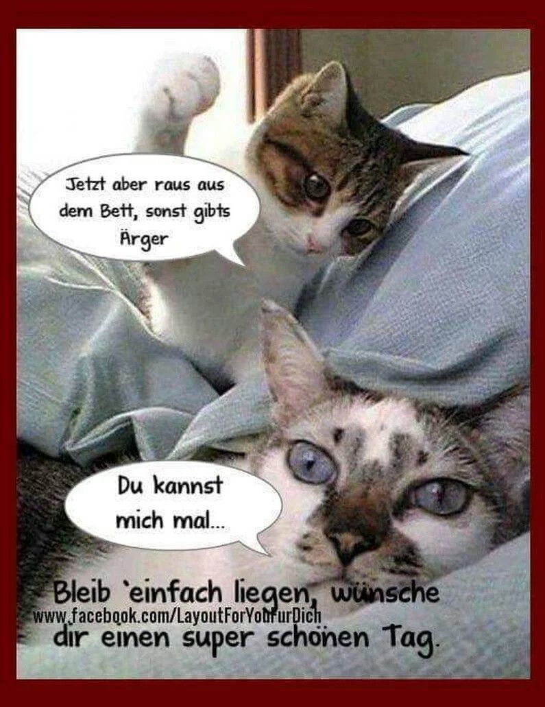 gute nacht kätzchen