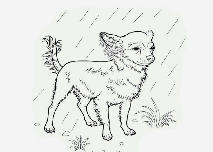 Chihuahua+coloring+page-713974.jpg (700×500)