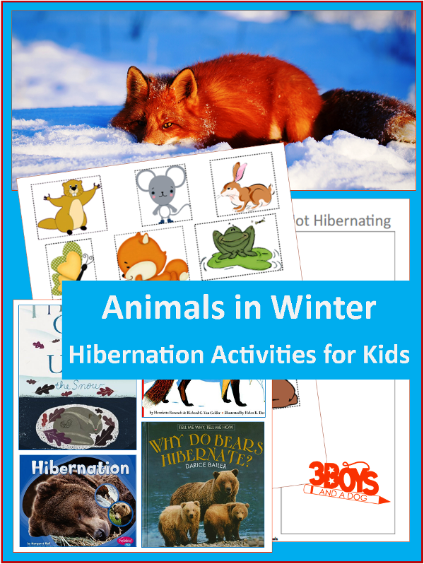 Animals in Winter Hibernation Winter animals preschool