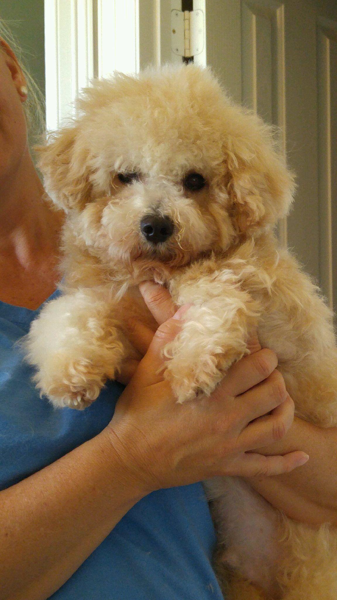 Adopt Adopted!! Luigi S .TX on Paws rescue, Rescue