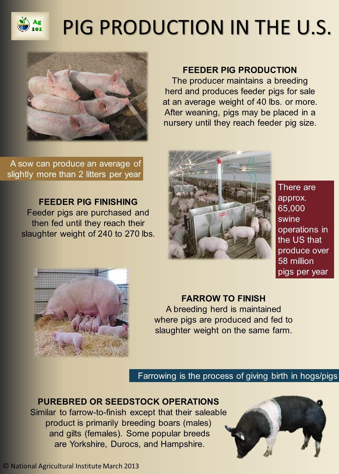Pig Production | Livestock Production | Pig farming, Animal