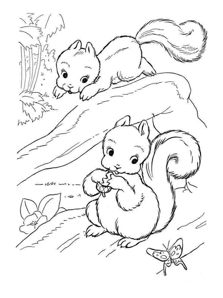 Baby Squirrel Coloring Pages Squirrel Is A Rodent Mammal Squirrels Have A Small Body Shape Of Squirrel Coloring Page Animal Coloring Pages Tree Coloring Page