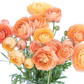 FiftyFlowers.com - Ranunculus Apricot Blend. Love the layers and layers of petals along with the varying sized blooms.