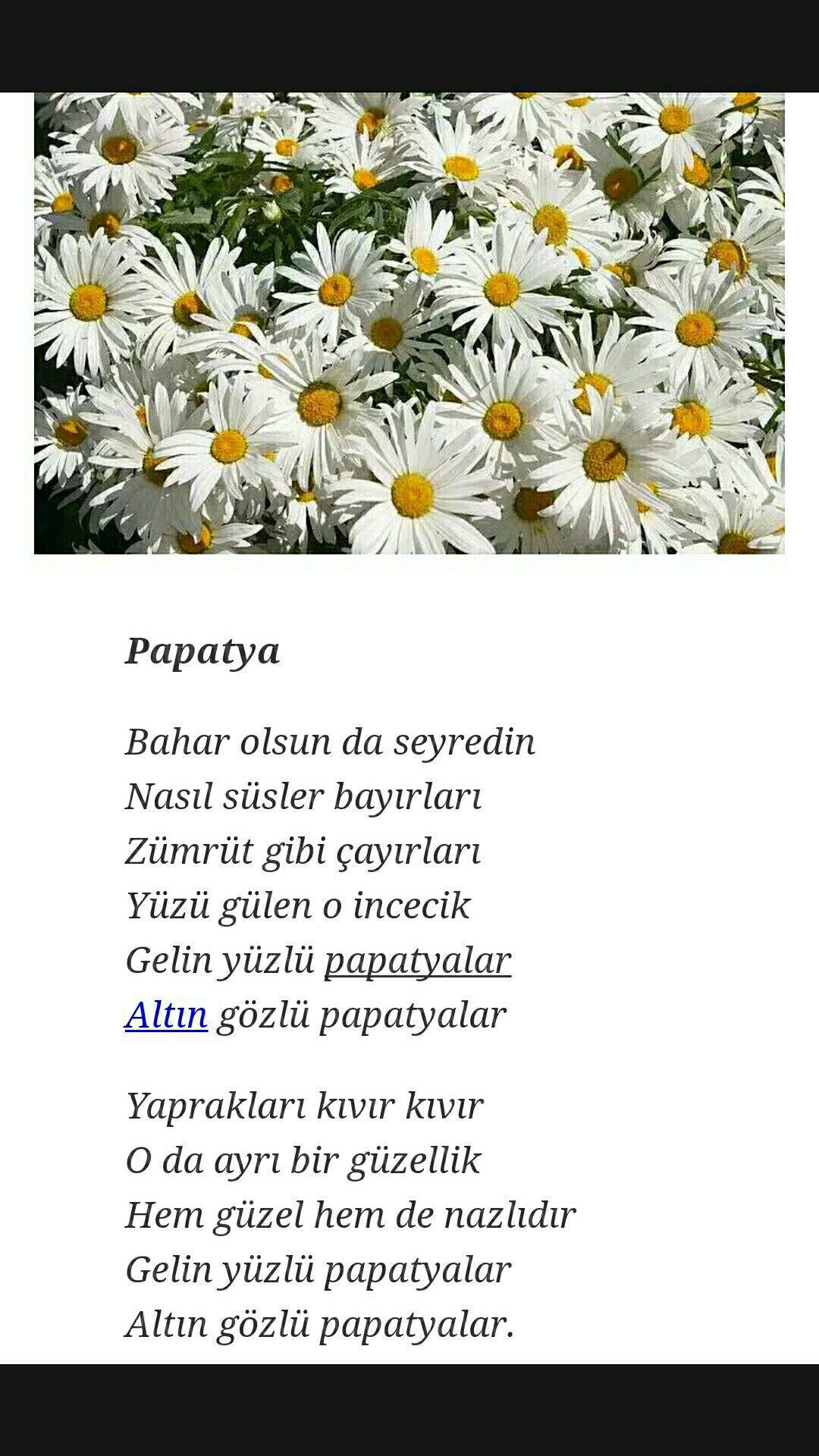 Gelin Yüzlü Papatyalar Tevfik Fikret Poetry şiir