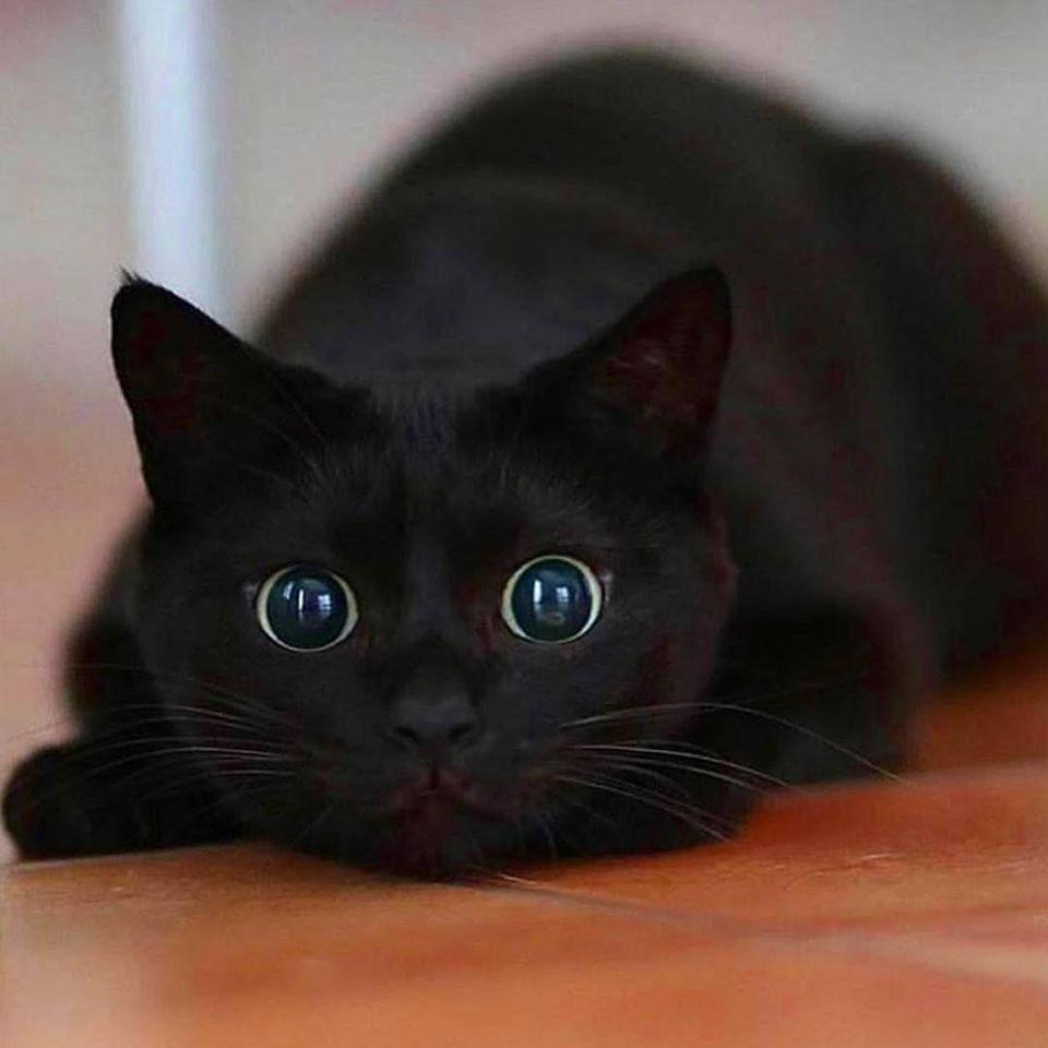 Pin By Margit Granberg On Katten Honden In 2020 Pretty Cats Cats Kittens