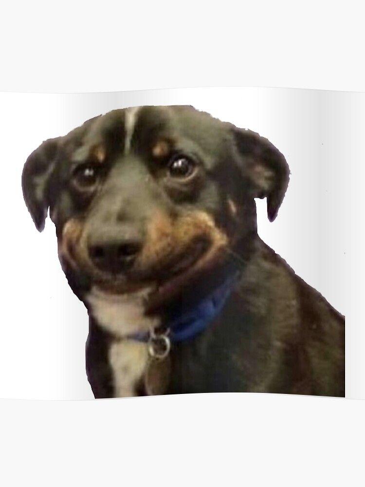 Dog Smiling Meme : smiling, Awkward, Smile, Poster, Blank, Template, Imgflip, Tenor, Adorab…, Smiling, Dogs,, Memes,, Memes