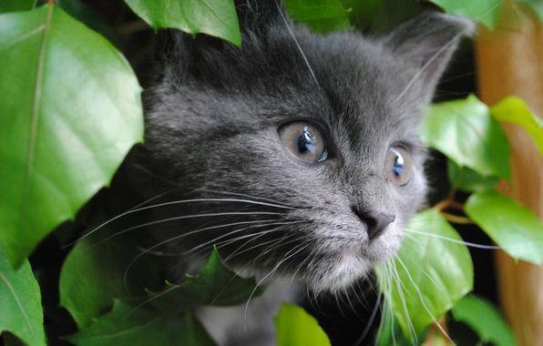 Wallpaper cat, cat, cat, eyes, eyes, focus, smoky, leaves, foliage, green