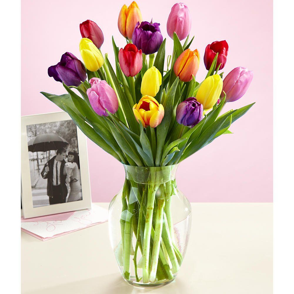 Multi colored tulips with free glass vase flowers price multi colored tulips with free glass vase flowers price 2499 reviewsmspy