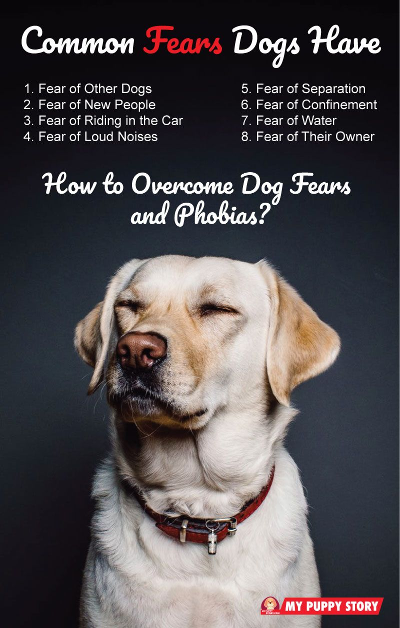 Dog Fears And Phobia And How To Overcome Them In 2020 Anxious Dog Phobias Dogs