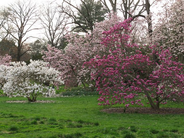 Magnolia Magnolia Gardens And Front Yards
