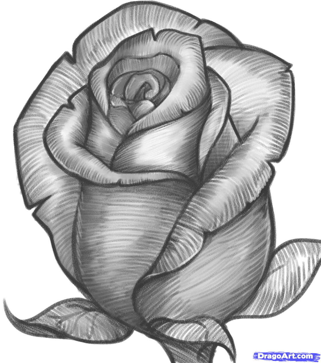 How To Draw A Rose Bud, Rose Bud, Step By Step, Flowers,