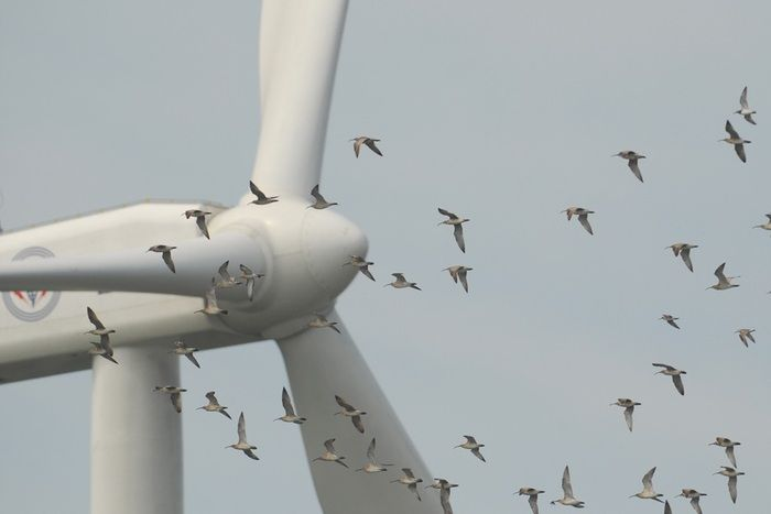 A major US power company has pleaded guilty to killing eagles and other birds at two wind farms and agreed to pay $1 million