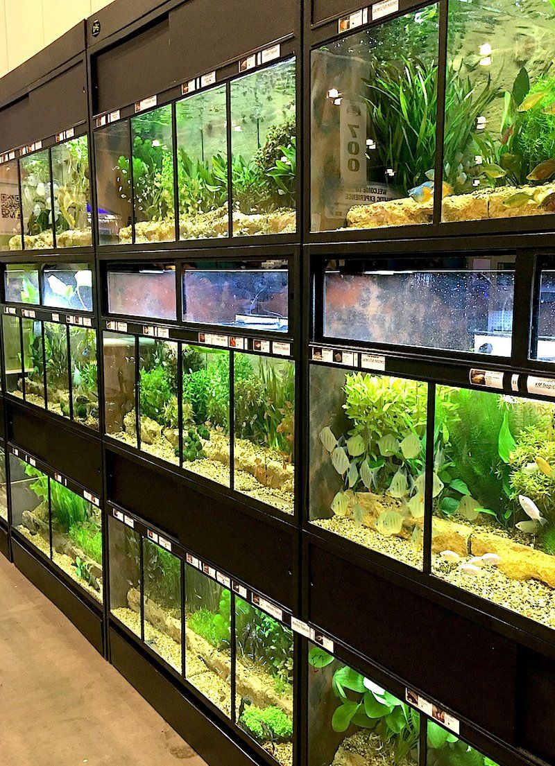The Success of our THRIVE Fish Enclosures Aquarium fish
