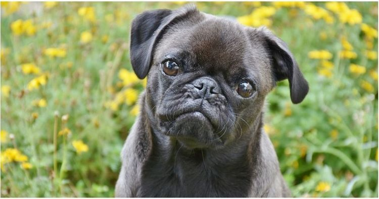 Watch Out For These 15 Coins Worth Thousands Of Dollars Lap Dogs Pug Puppies For Sale Your Dog