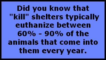 Please adopt or Foster . Don't buy from pet stores . Don't discard your pet. Think before you get a pet. Dogs are children that never grow up and leave home.