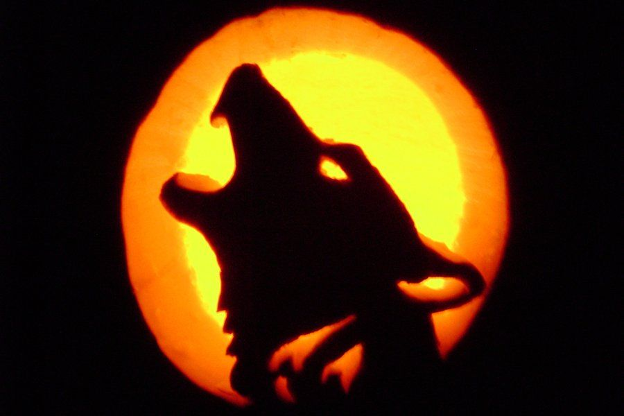 Pumpkin wolf carving wolf pumpkin carving by storms shadow on