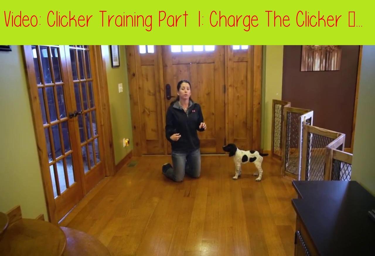 Pin On Dog Training Videos