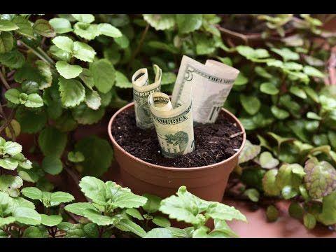 Plantas Para Atraer El Dinero Y Amor Plantas Para Atraer Dinero Planta Del Dinero Plantas De Buena Suerte