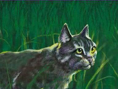 Výsledek obrázku pro warriors cats graystripe