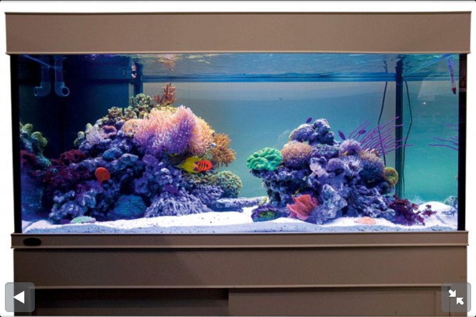 Reef tank saltwater fish aquarium blue planet for Reef fish tank