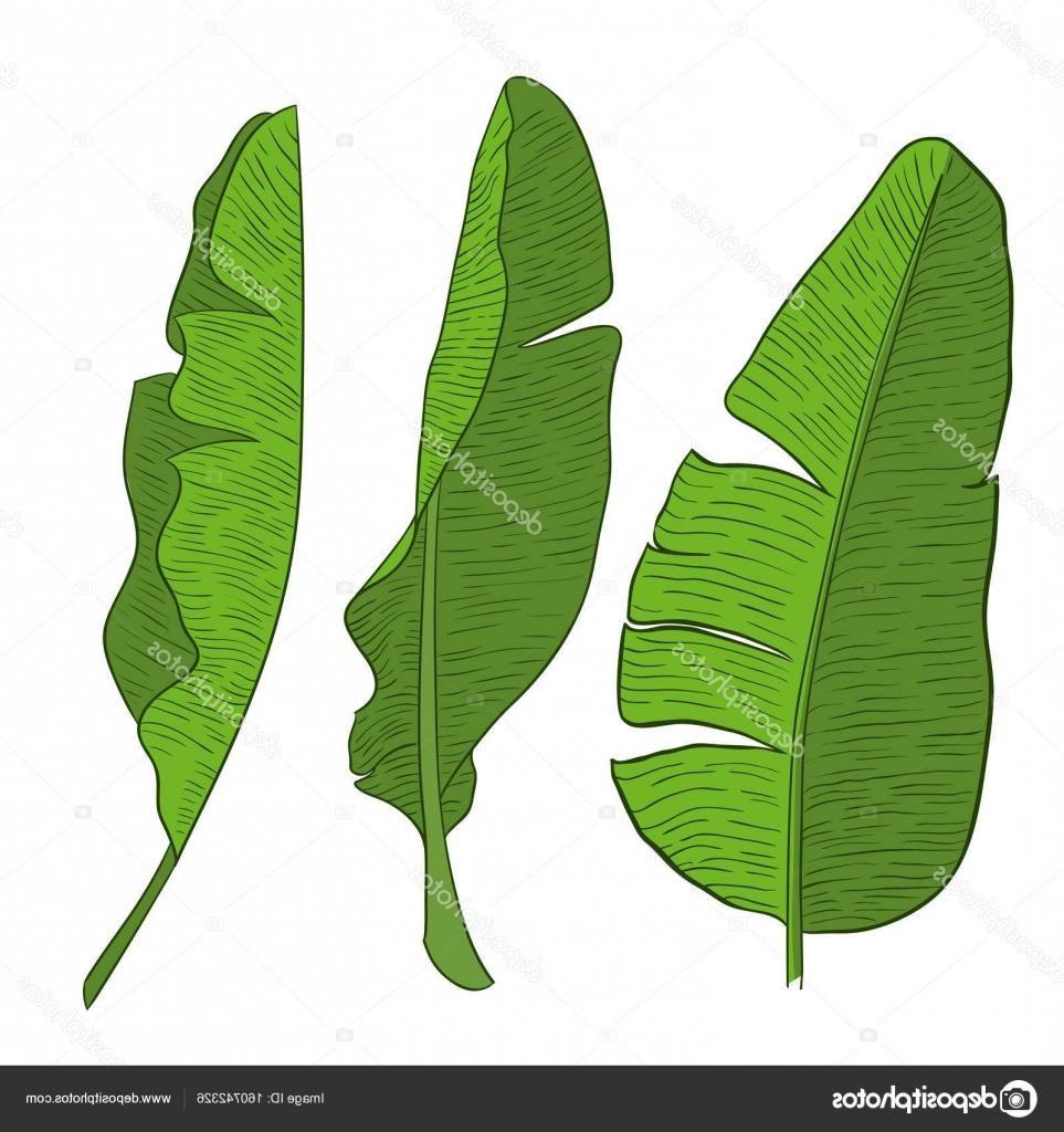 Image Result For Banana Leaf Vector Banana Leaf Leaves Vector Leaves