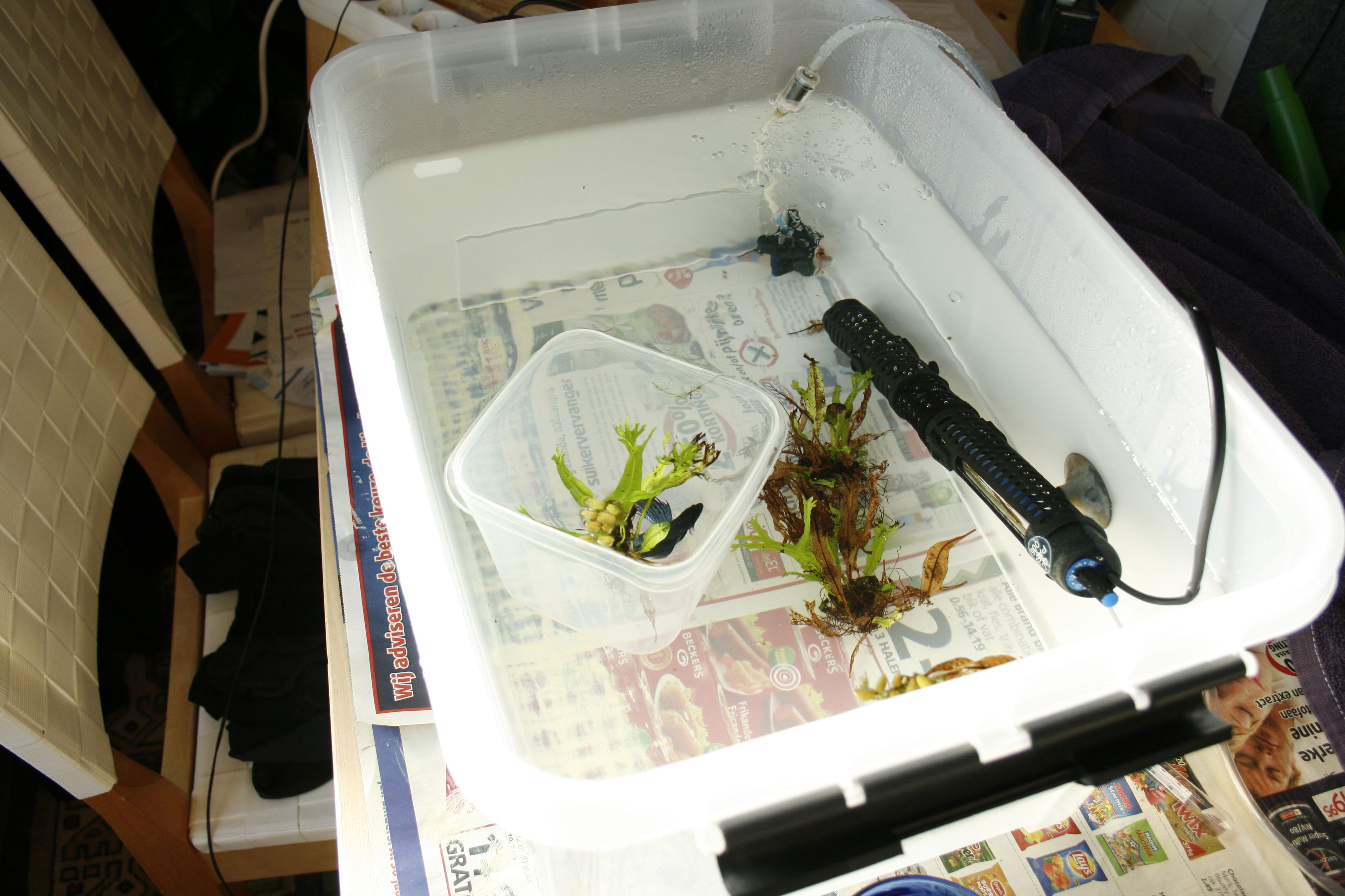Freshwater fish acclimation - And Time To Acclimate Quarenteen Tank