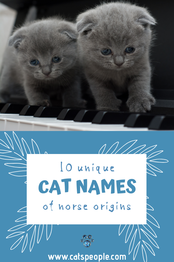 10 Unique Cat Names of Norse Origins Male Edition. (With