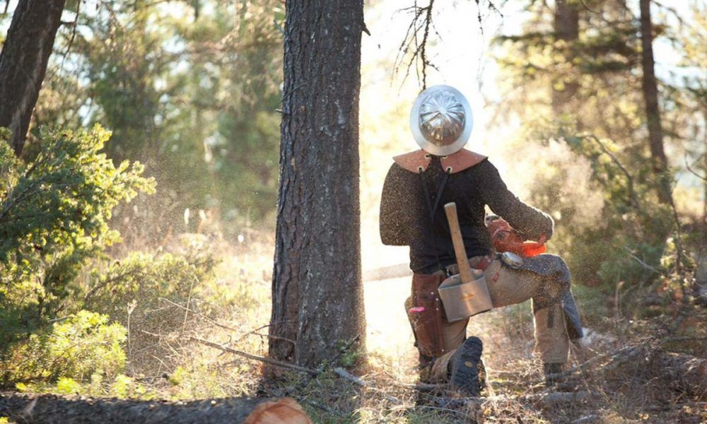 How can professional tree removal melbourne help you
