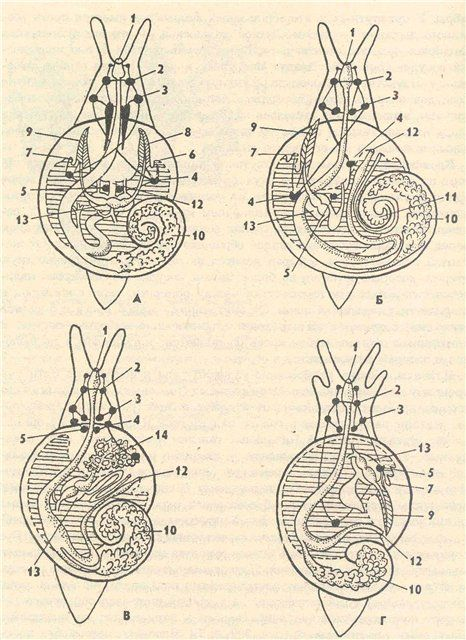 9c79564fecc2.jpg (466×640) | anatomical | Pinterest