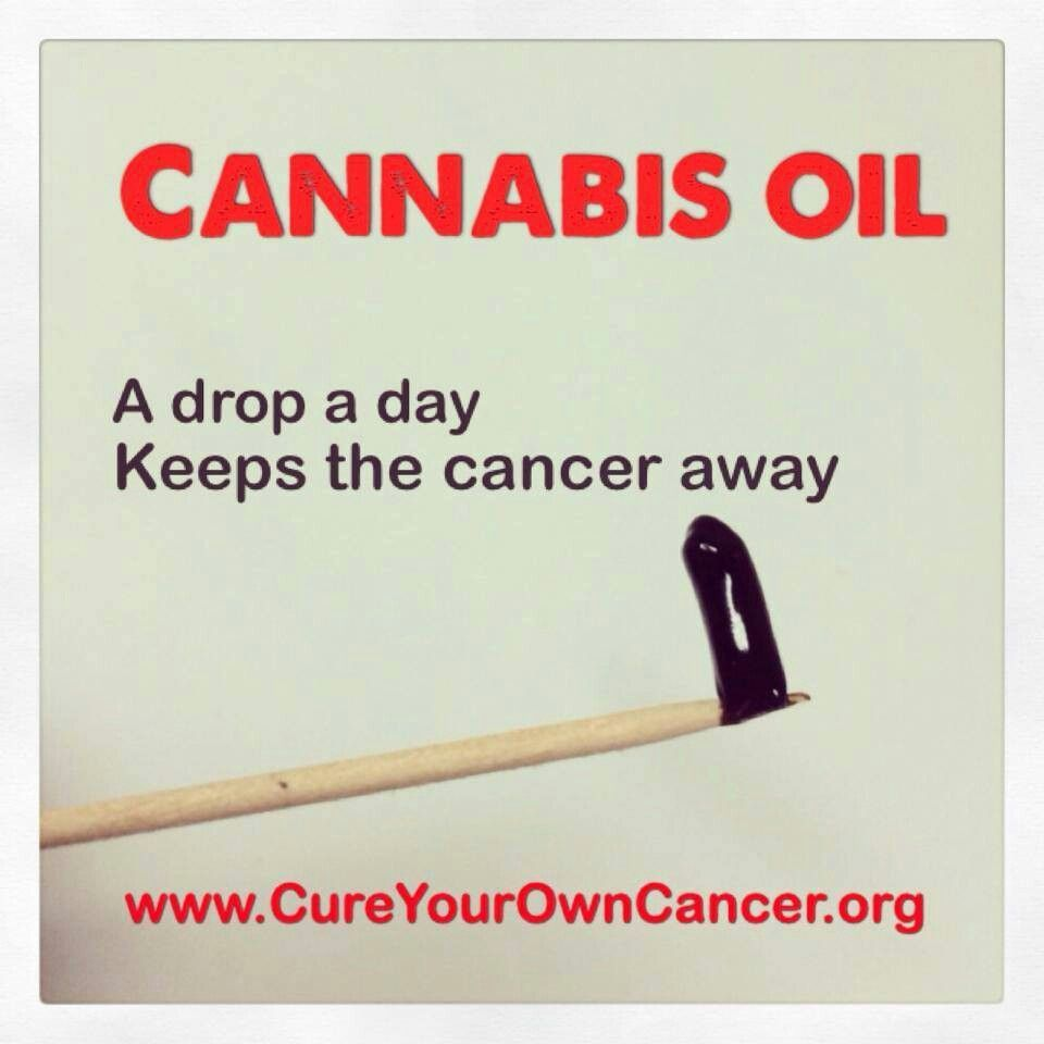 Cannabis oil, a drop a day keeps the cancer away
