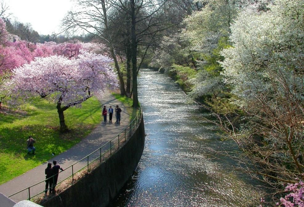 Belleville, NJ : Cherry Blossoms at Branch Brook Park Went ...