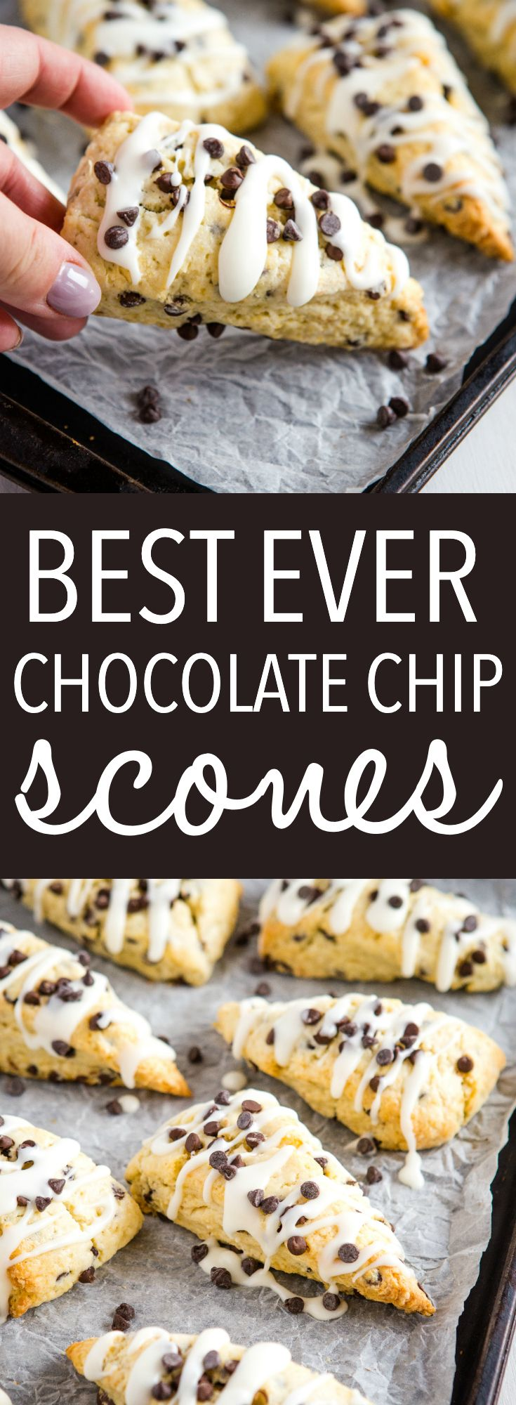 These Best Ever Chocolate Chip Scones are the perfect snack or dessert to enjoy with coffee or tea, and they're SO easy to make for beginning bakers! Packed with mini chocolate chips and topped with a simple sweet glaze! Recipe from thebusybaker.ca! #scones #chocolatechip #baking #easyrecipe #british #tea #snack #biscuits