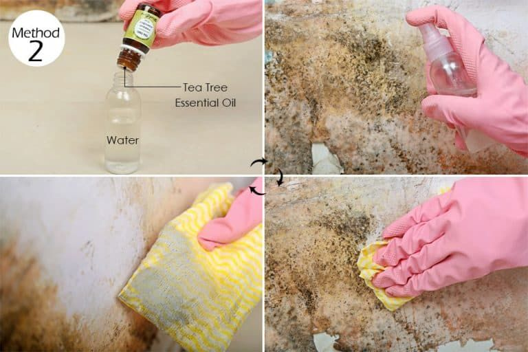 Dilute Tea Tree Oil In Water To Get Rid Of Mold And Mildew Mold