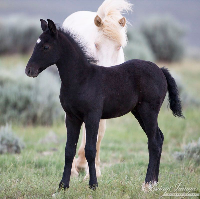 wild horse single muslim girls If a woman is a new muslimand she is currently not married and has a child who she must support - living in a non-muslim country what is the ruling for her r.