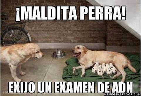 Memes En Espanol Buscar Con Google Memes Perros Memes Divertidos Memes De Perros Chistosos