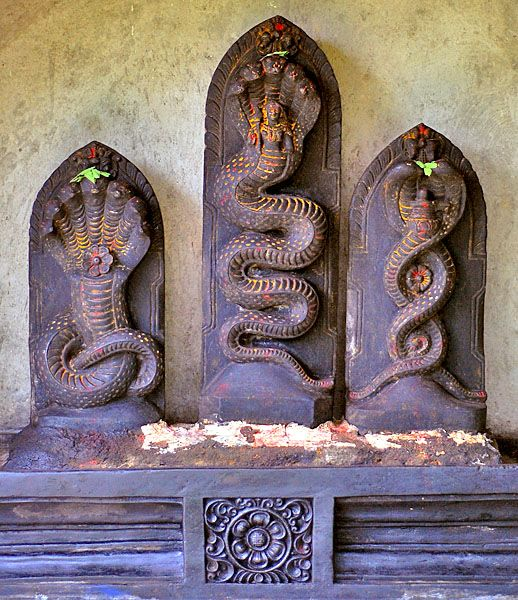 In this particular Naga Pratishta there are four snakes. The one on the left is a 7 headed snake (adi-shesha or sheshnag). The middle 5-headed snake has an idol of Subramanya (considered the god of snakes) below its hood. On the right there are two snakes intertwined with a Shiva Linga in the middle. Snakes intertwine only while mating, its anyones guess why mating snakes are depicted here!