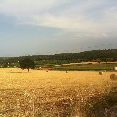 Valle d'Itria, come in un dipinto, #PugliaLP