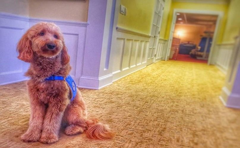 Funeral Home Gets A Therapy Dog To Help Clients Cope With Grief