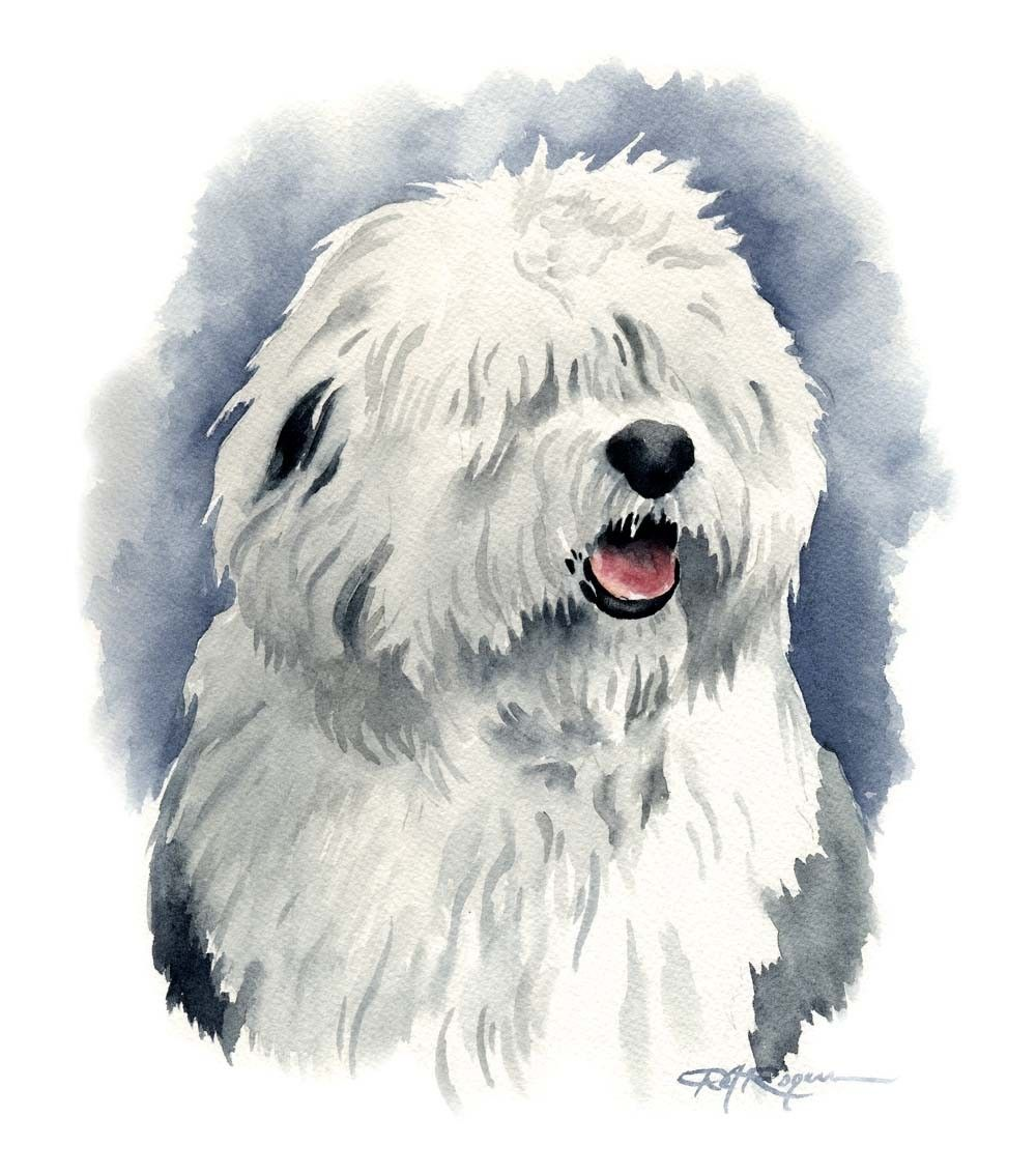 find this pin and more on old english sheepdog