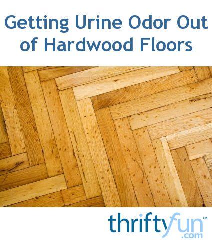 Pet Urine Odor From Hardwood Floors