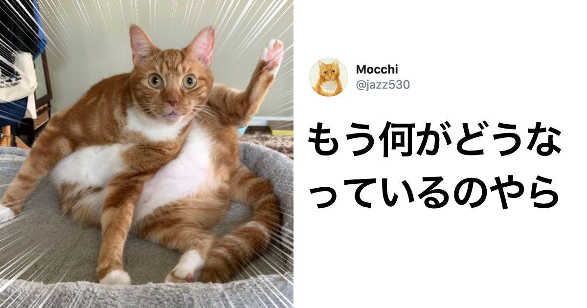 衝撃 猫には骨がないらしい 8選 猫 にゃんこ 動物