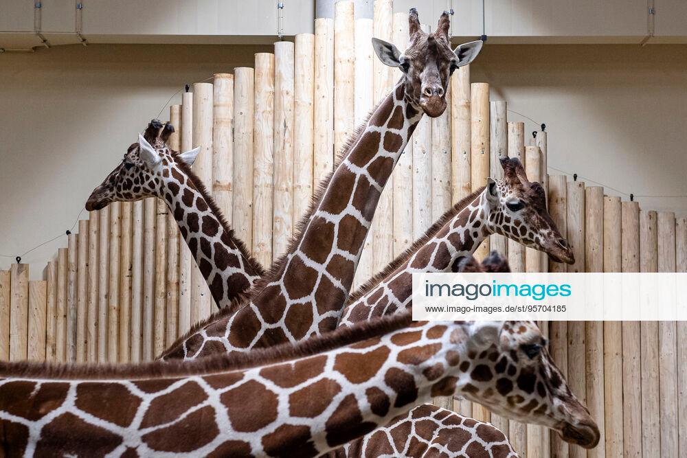 Stockfotos Editorial Und Creative Bilder Afrikanische Tiere Messe Leipzig Deutsches Theater