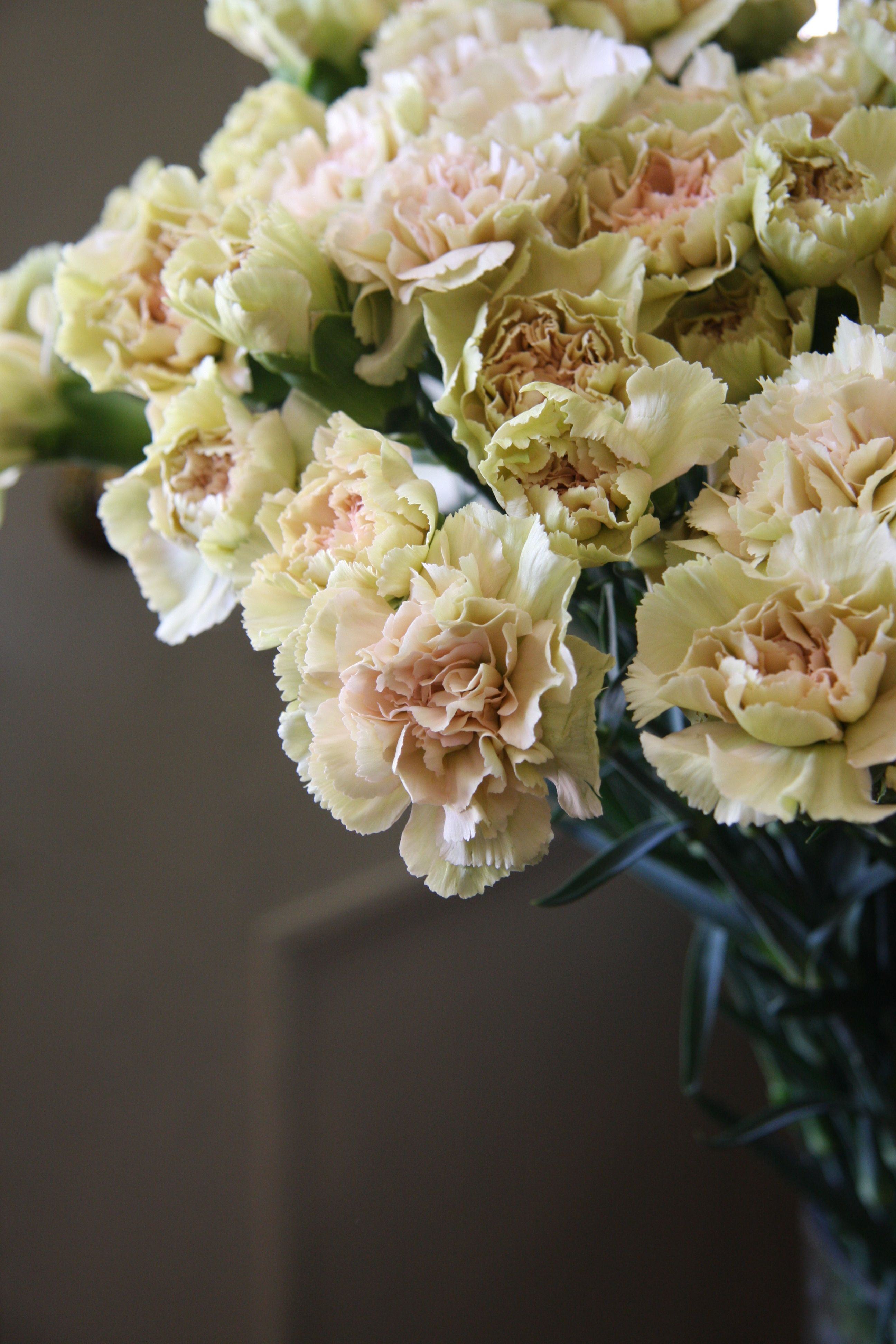 Carnation Richmond Flowers Pinterest Carnation Flowers And Plants